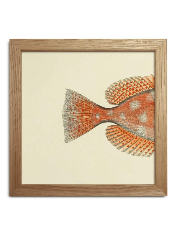 halv-fisk